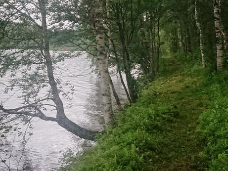 FISKESTI I MØRSVIKVATN