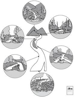 Wood Regime of Rivers