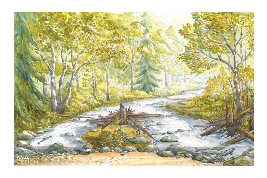 River restoration; Pacific Northwest; Large wood; Salmon