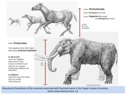 Ancient Mammals of Death Valley