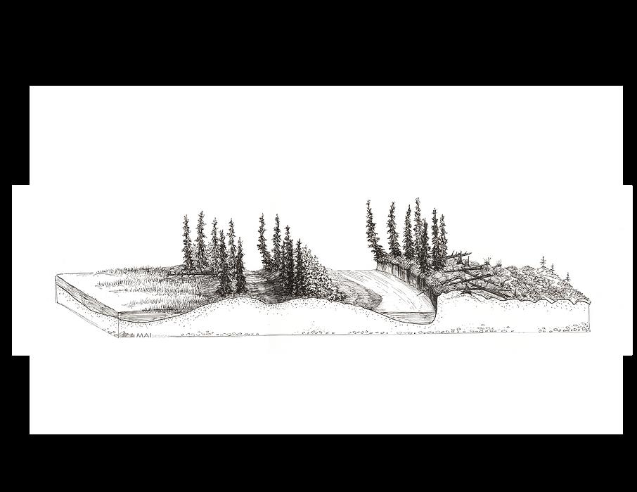 Subarctic Floodplains; Scientific Illustration
