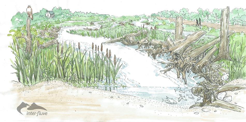 Cape Cod Cranberry Bog Restoration; wetland resoration