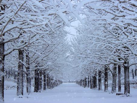 冬になるとなぜ風邪が流行るの?