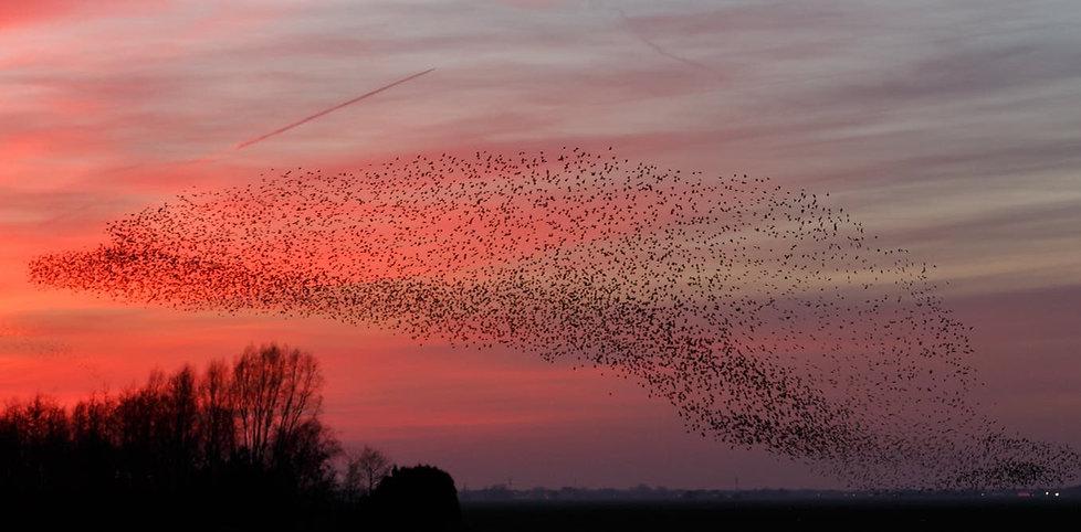 flocks.jpg