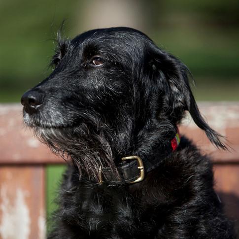 Lola/Terrier Cross