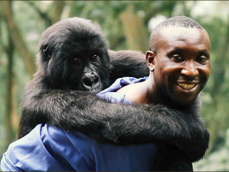 Virunga - A Truly Compelling Wildlife Documentary