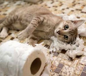 What can I do When My Pet Misbehaves?