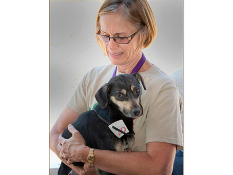 Case Study: My day with a veterinary M*A*S*H Unit