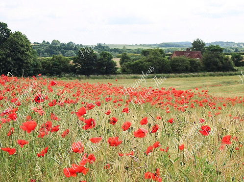 The Poppy Collection (1)