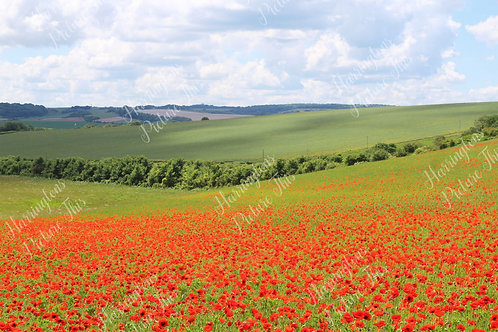 The Poppy Collection (10)