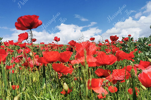 The Poppy Collection (2)