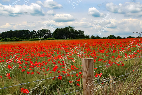The Poppy Collection (5)