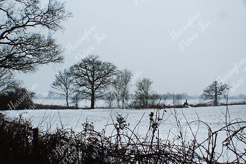 Landscapes (5)