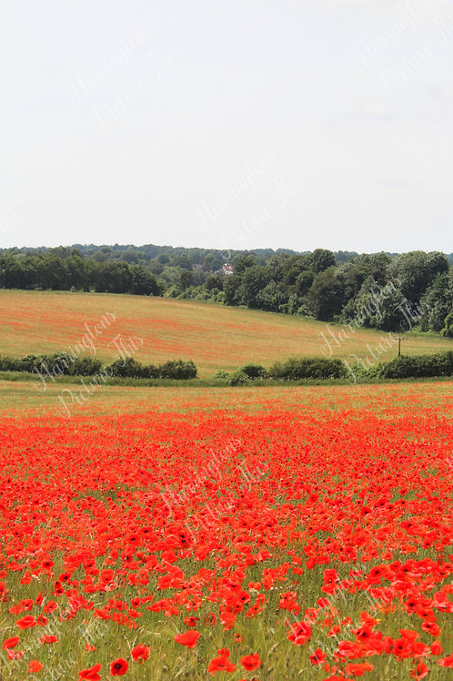The Poppy Collection (17)