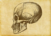 Menschliche Schädel-Skizze
