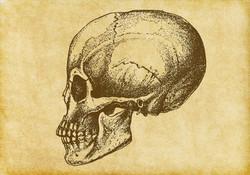 Skull Tags