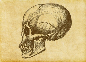 The Story of a Skull...