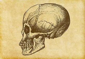 Bosquejo del cráneo humano