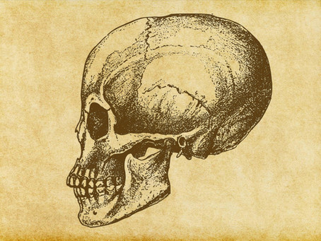 Homo coronicus: Born of Fear or Resilience?