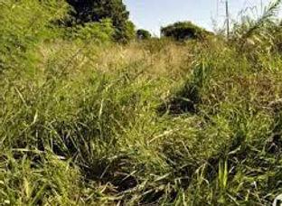 matagal.jpg