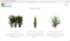 diseño web juan bufí