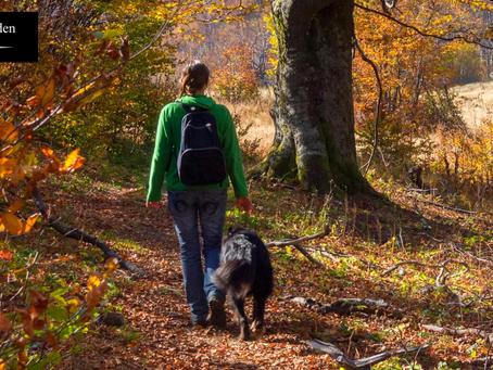 狗狗好奇心強易走失 6個寵主必學的預防招數