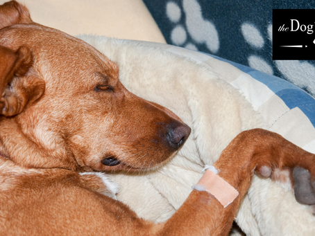 狗狗受傷的急救護理