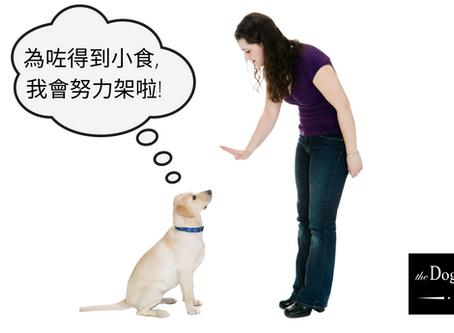 善用零食 訓練狗狗更輕鬆