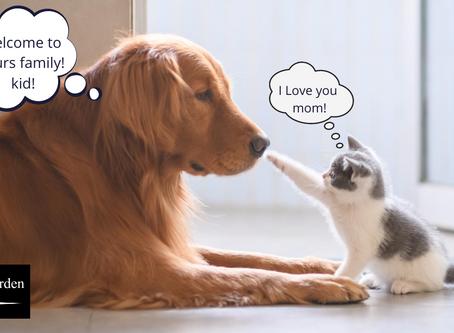 領養貓咪應做好哪些準備?