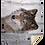 Thumbnail: Premium Mink Sherpa Blanket 50x60