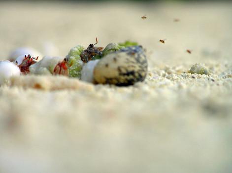 Big Life, Maldives