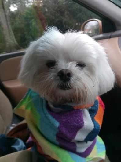 Cutie Milo