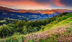 wild-flowers-in-mountains