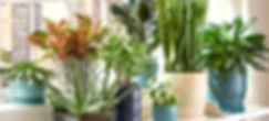indoor-plants-hero-mob 1.jpg