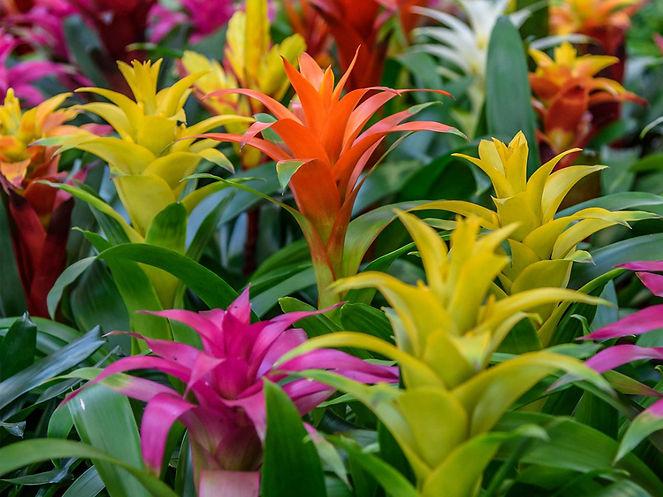bromeliads-1.jpg