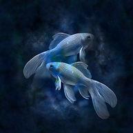 horoscope-639125_640.jpg