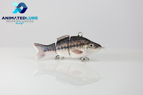 Spotted Bass Mini
