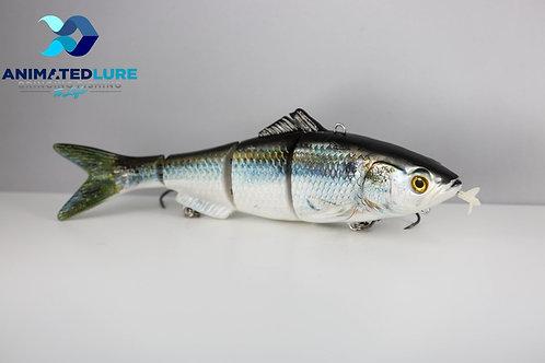 Threadfin Herring