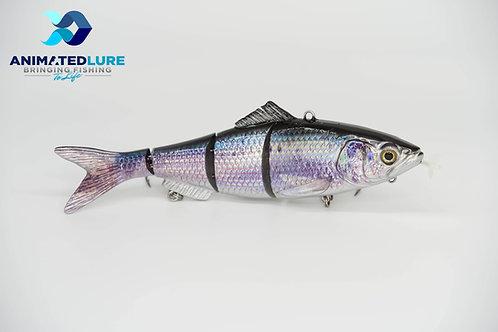 Sardine Specialty