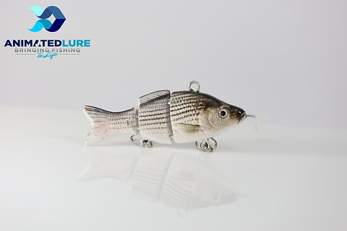 Hybrid Striped Bass Mini