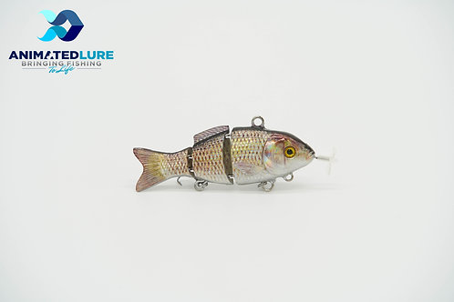 Common Carp Specialty Mini