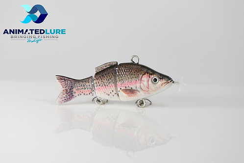 Rainbow Trout Mini