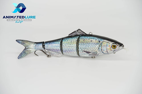 American Shad Specialty SW