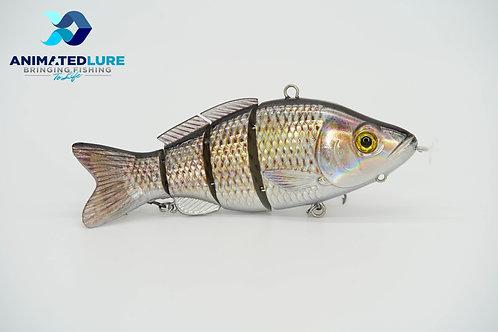 Common Carp Specialty