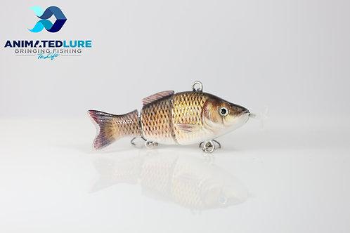 Common Carp Mini