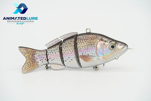 Rainbow Trout Specialty