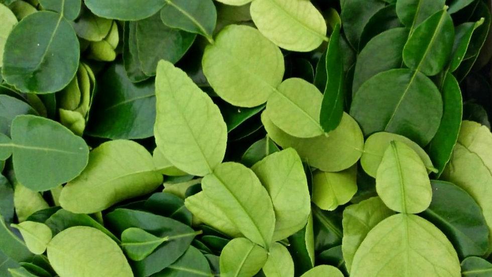 Feuilles de Combava cultivées naturellement: 1500 feuilles