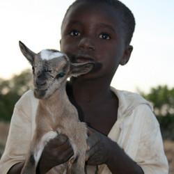 een kleine herder