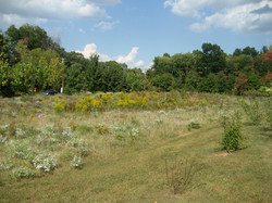 Bush Bioretention.jpg