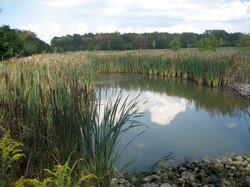 Bush Park Pond After.jpg